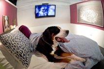 Ouverture d'un hôtel de luxe pour les chiens à New York