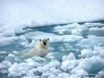 Arctique: vers une fonte record de la calotte glaciaire dans deux semaines