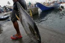 Entrée en vigueur de la nouvelle convention de pêche du Pacifique Sud