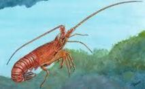Les langoustes rouges réintroduites dans une zone protégée de la Côte d'Azur