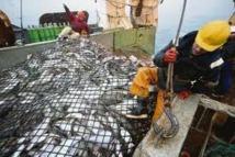 Wellington annonce un fonds de protection des pêches dans le Pacifique