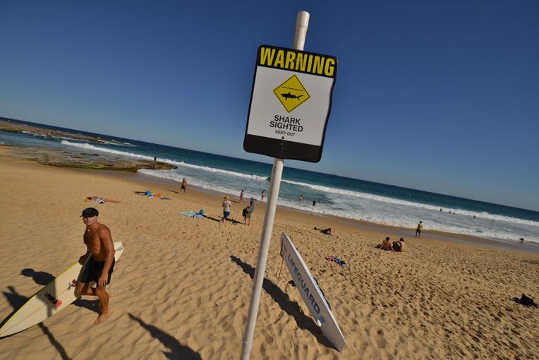 Australie: un surfeur tué par un requin