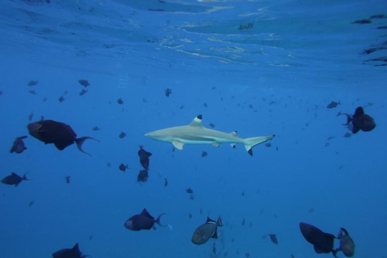 Shark feeding à la Vallée Blanche : renvoi du procès au 20 octobre