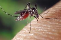 Pour la première fois, un vaccin partiellement efficace contre la dengue