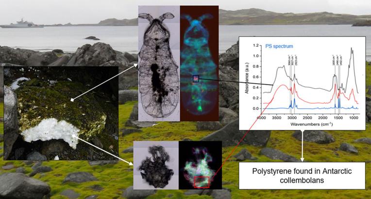Du microplastique découvert dans l'écosystème terrestre de l'Antarctique