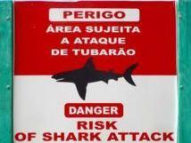 Au Brésil, les requins menacent les plages paradisiaques de Recife