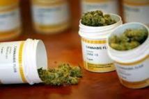 Ces malades qui, face à la douleur, consomment du cannabis