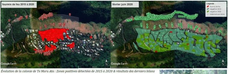 Le traitement par drones s'est révélé très efficace à Te Maru Ata, c'est donc la méthode qui sera utilisée pour exterminer la PFF de Papehue.