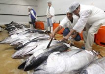 Les élus Tahoeraa en visite au port de pêche