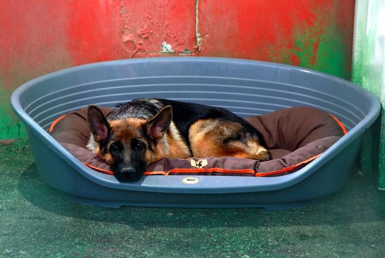 Le premier chien testé positif au coronavirus aux Etats-Unis est mort