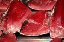 WWF dénonce un trafic de thon rouge en Méditerranée via le Panama entre 2000 et 2010