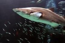 Paris veut accélérer sur la protection de la biodiversité en haute mer