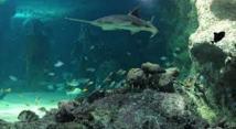 L'Australie crée le plus vaste réseau au monde de réserves marines