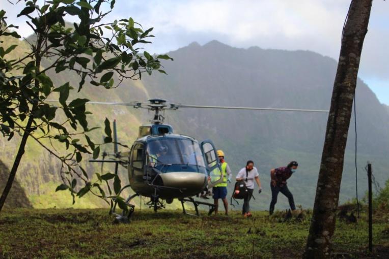 Maraeti'a : nouvelle étape du projet de restauration de forêt