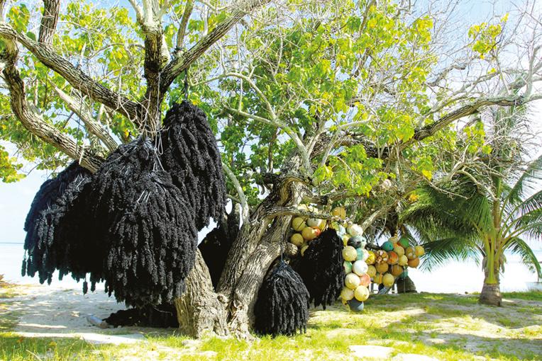 Cet arbre symbolise à lui seul les activités encore exercées à Kauehi et liées à la perliculture : des collecteurs de naissains et des bouées pour les installer dans le lagon.