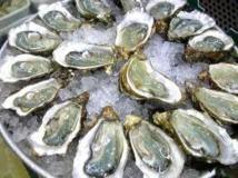 Le congrès mondial de l'huître se penche sur leur inquiétante mortalité