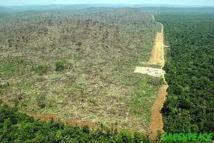 La déforestation au Brésil atteint son plus bas niveau historique