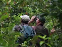 Au coeur du Pérou, des ornithologues venus d'ailleurs donnent libre cours à leur passion