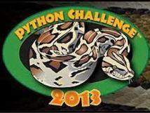 """USA: la Floride lance le """"Challenge Python"""", concours de capture de serpents"""