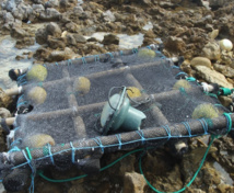 Enquêtes sur les dérives des DCP (dispositif de concentration de poissons)
