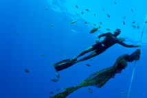 Yoram et Manoa, une sortie apnée en plein océan