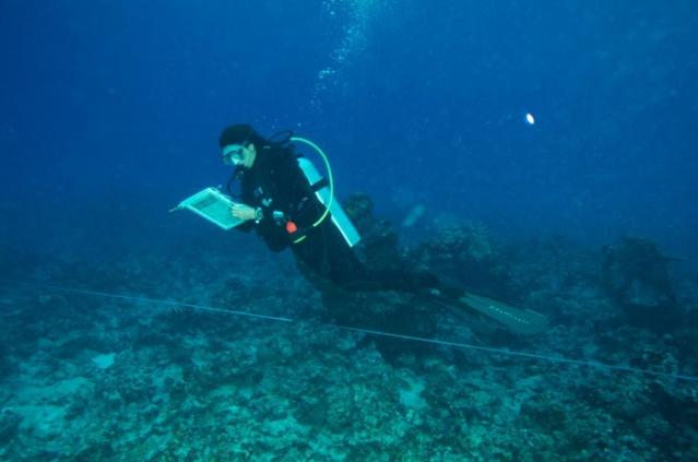 L'Ifrecor : appel à projets pour le corail