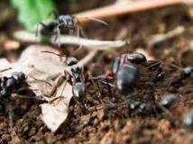 Produire sur sol vivant: l'agriculture qui mise tout sur la nature