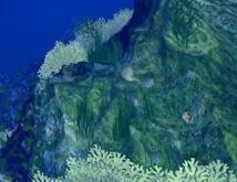 Acidification des océans : des chercheurs australiens identifient une algue salvatrice