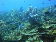 Le boum économique de la Chine a détruit une grande partie de ses coraux