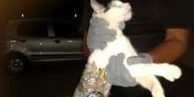 Brésil: un chat spécialement entraîné à l'évasion de prisonniers