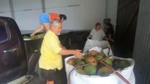 Les Raromatai exportent leurs cocos