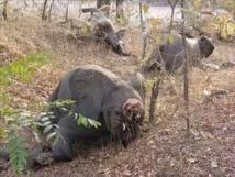 Une famille de 11 éléphants massacrée par des braconniers au Kenya