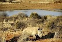 Un bébé rhinocéros survit à une attaque à la hache par des braconniers en Afrique du Sud