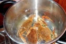 Les crabes pourraient ressentir la douleur, assurent des chercheurs