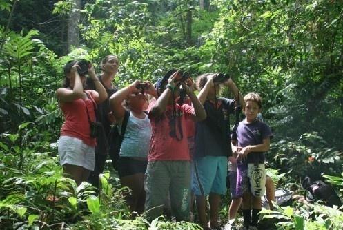 Protection du Monarque : Tahiti et Raroto'a, même combat