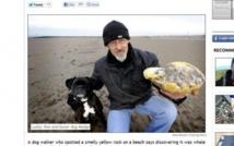 """50.000 euros offerts à un Britannique qui a trouvé du """"vomi de baleine rare"""""""