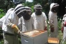 Abeilles: Bruxelles recommande une interdiction ciblée des pesticides