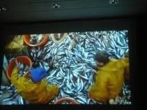 Supprimer les rejets de poissons en mer: un casse-tête pour la pêche française