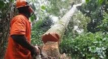 Greenpeace proteste à Paris contre une vaste opération de déforestation au Cameroun
