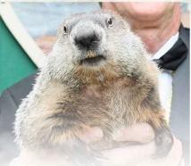 USA: c'est bientôt le printemps, a dit la marmotte