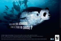 Le WWF appelle les parlementaires européens à soutenir la réforme de la pêche
