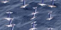 Ce n'est pas un drone, c'est un calamar qui vole