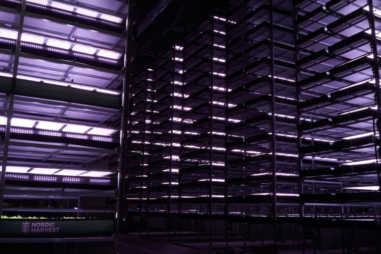 """Une des plus grandes fermes """"verticales"""" d'Europe ouvre ses portes au Danemark"""
