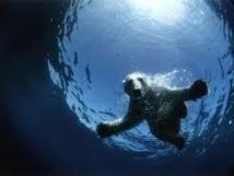 Le PNUE plaide pour des garde-fous autour des ressources de l'Arctique