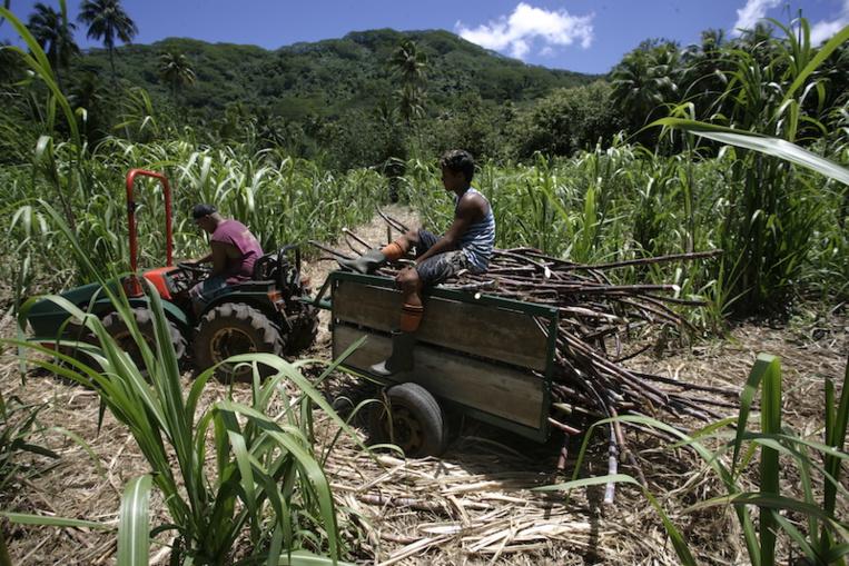 Le Cesec attend davantage du schéma directeur de l'agriculture
