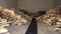 Appel pour des sanctions internationales contre le trafic d'ivoire