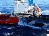 Nouveaux heurts en Antarctique entre baleiniers japonais et Sea Shepherd