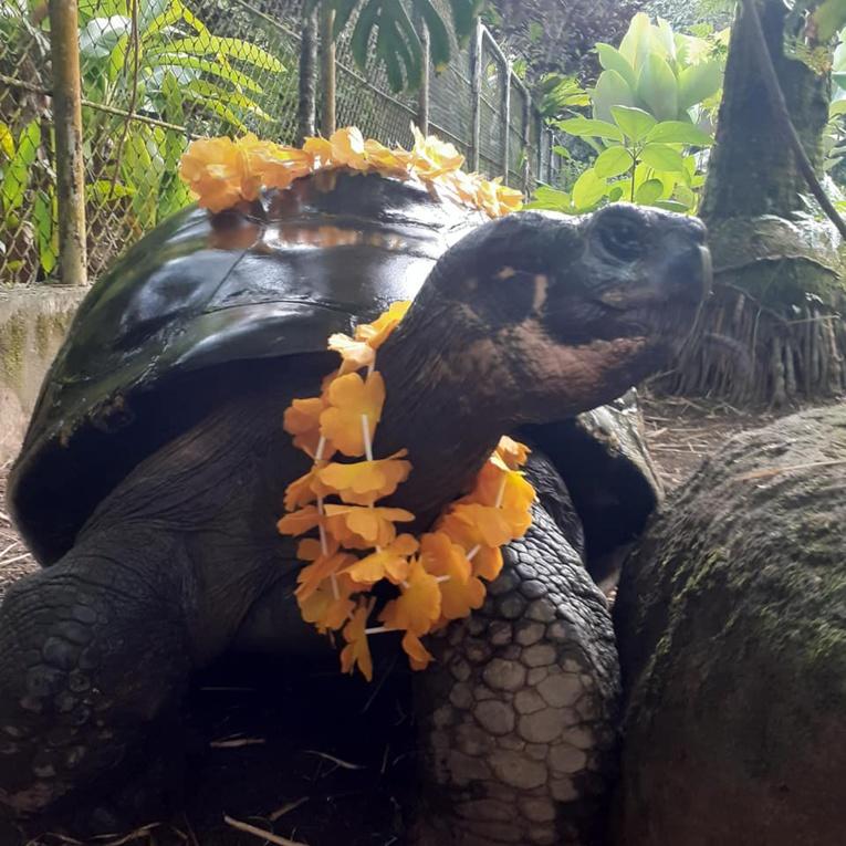 Te Ara Ui a fêté ses 193 ans à Papeari