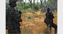 Rangers contre AK-47, la lutte inégale face aux trafiquants d'espèces sauvages