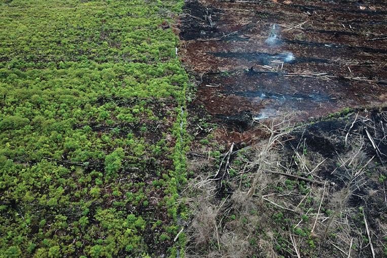 """Déforestation: 43 millions d'hectares perdus sur les principaux """"fronts"""", selon le WWF"""